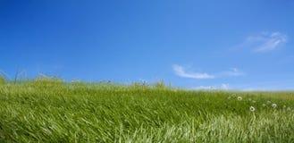 tła błękitny trawy zieleni niebo Fotografia Stock