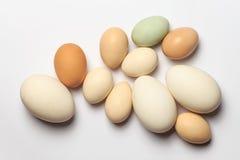 tła bambusa jajka gąska Zdjęcie Stock