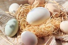 tła bambusa jajka gąska Zdjęcia Royalty Free