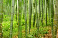 tła bambusa zakończenia naturalni drzewa naturalny Fotografia Royalty Free