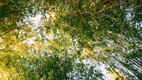 tła bambusa zakończenia naturalni drzewa naturalny Zdjęcia Royalty Free