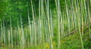 tła bambusa zakończenia naturalni drzewa naturalny Obraz Stock