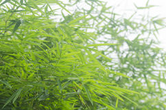 tła bambusa zieleni liść Obraz Stock