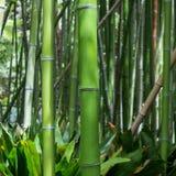 tła bambusowy pojęcia lasu zen Obraz Royalty Free