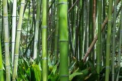 tła bambusowy pojęcia lasu zen Obrazy Royalty Free