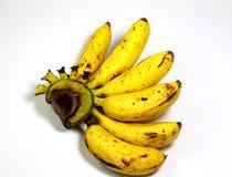 tła bananowej wiązki odosobniony biel Obraz Royalty Free