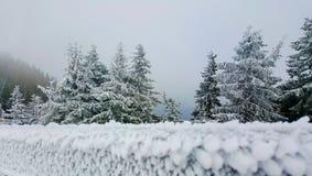 tła bożych narodzeń jedlinowa igły śniegu zima Fotografia Stock