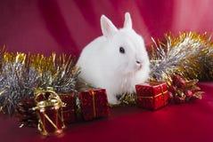 tła bożych narodzeń królika czerwień Obraz Royalty Free