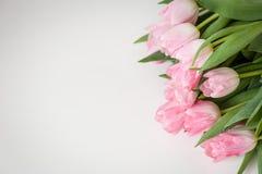 tła bukieta menchii tulipany biały dodatkowy karcianego formata wakacje Obrazy Stock