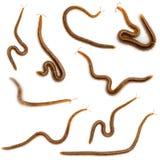 tła centipedes kolażu przodu biel Obraz Royalty Free