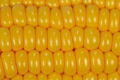 tła cobs kukurudzy kolor żółty Obrazy Royalty Free