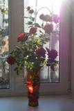 tła colour obrazu róż wazy wody biel Obrazy Stock