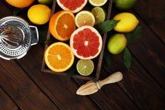 tła cytrus przygotowywający tekst Asortowana świeża cytrus owoc Cytryna, pomarańczowy wapno, grapefruitowy Zdjęcie Royalty Free