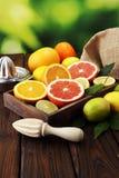 tła cytrus przygotowywający tekst Asortowana świeża cytrus owoc Cytryna, pomarańczowy wapno, grapefruitowy Fotografia Stock