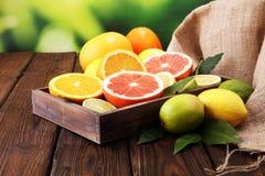 tła cytrus przygotowywający tekst Asortowana świeża cytrus owoc Cytryna, pomarańczowy wapno, grapefruitowy Obraz Royalty Free