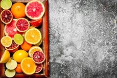 tła cytrus przygotowywający tekst Cytrus owoc w starej tacy Zdjęcie Stock