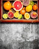 tła cytrus przygotowywający tekst Cytrus owoc w starej tacy Obrazy Stock