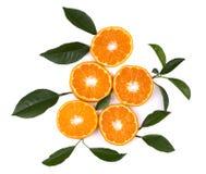 tła cytrusa owoc odizolowywali biel Odosobnione cytrus owoc Kawałki odizolowywający na białym tle mandarynka obraz stock