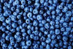 tła czarnej jagody karmowy zdrowy organicznie Dojrzałe i soczyste świeże ukradzione borówki zamykają up Odgórny widok lub mieszka Zdjęcie Royalty Free