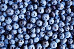 tła czarnej jagody karmowy zdrowy organicznie Dojrzałe i soczyste świeże ukradzione borówki zamykają up Odgórny widok lub mieszka Fotografia Stock