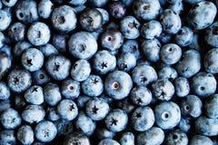 tła czarnej jagody karmowy zdrowy organicznie Dojrzałe i soczyste świeże ukradzione borówki zamykają up Odgórny widok lub mieszka Obrazy Stock