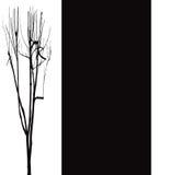 tła czarny końcówka biel Obrazy Royalty Free