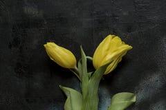 tła czarny tulipanów kolor żółty Obrazy Stock