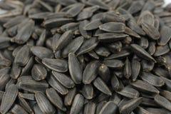 tła czarny ziaren słonecznikowa tekstura Fotografia Royalty Free