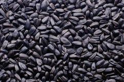 tła czarny ziaren słonecznikowa tekstura Zdjęcie Royalty Free