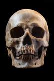 tła czerń zakończenia ludzka czaszka ludzki fotografia royalty free
