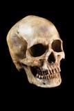 tła czerń zakończenia ludzka czaszka ludzki obraz royalty free