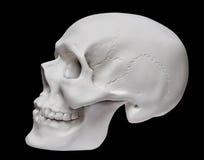 tła czerń zakończenia ludzka czaszka ludzki Obrazy Royalty Free