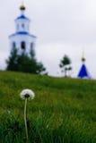 tła dandelion wyszczególniający kwiatu zieleni obrazek Zdjęcia Stock