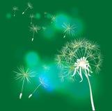 tła dandelion zieleń Zdjęcie Stock