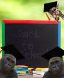 tła deski projekta ilustraci szkoły biel Obrazy Stock