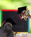 tła deski projekta ilustraci szkoły biel Zdjęcia Royalty Free