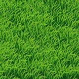 tła dof trawy zieleni płycizna Fotografia Royalty Free