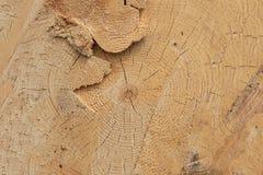 Tła drewniany świeży czyści rżnięty drewniany nierówny krakingowego w górę naturalnej powierzchni obraz royalty free