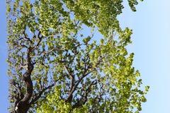 tła drzewo fotografia stock