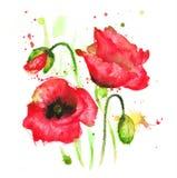 tła duży dekoracyjny kwiatu ogród odizolowywał makowego biel ilustracji