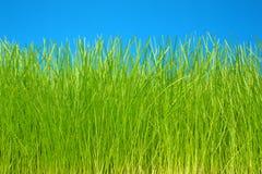 tła eco życzliwy trawy zieleni niebo Obraz Royalty Free