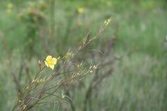 tła fantazi kwiatów zielony ilustraci wektoru kolor żółty Zdjęcia Stock
