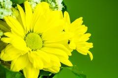 tła fantazi kwiatów zielony ilustraci wektoru kolor żółty Zdjęcie Stock
