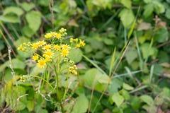 tła fantazi kwiatów zielony ilustraci wektoru kolor żółty Obrazy Stock