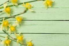 tła fantazi kwiatów zielony ilustraci wektoru kolor żółty Fotografia Royalty Free