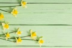 tła fantazi kwiatów zielony ilustraci wektoru kolor żółty Obraz Stock