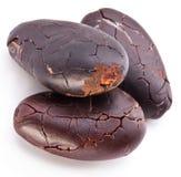 tła fasoli kakaowy ilustraci wektoru biel Zdjęcia Royalty Free
