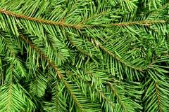 tła gałąź bożych narodzeń zielony drzewo Obraz Stock