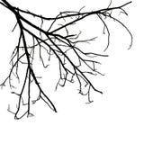 tła gałąź odosobniony drzewny biel Zdjęcie Stock