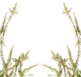 tła gałęziasta liść natura Zdjęcie Royalty Free